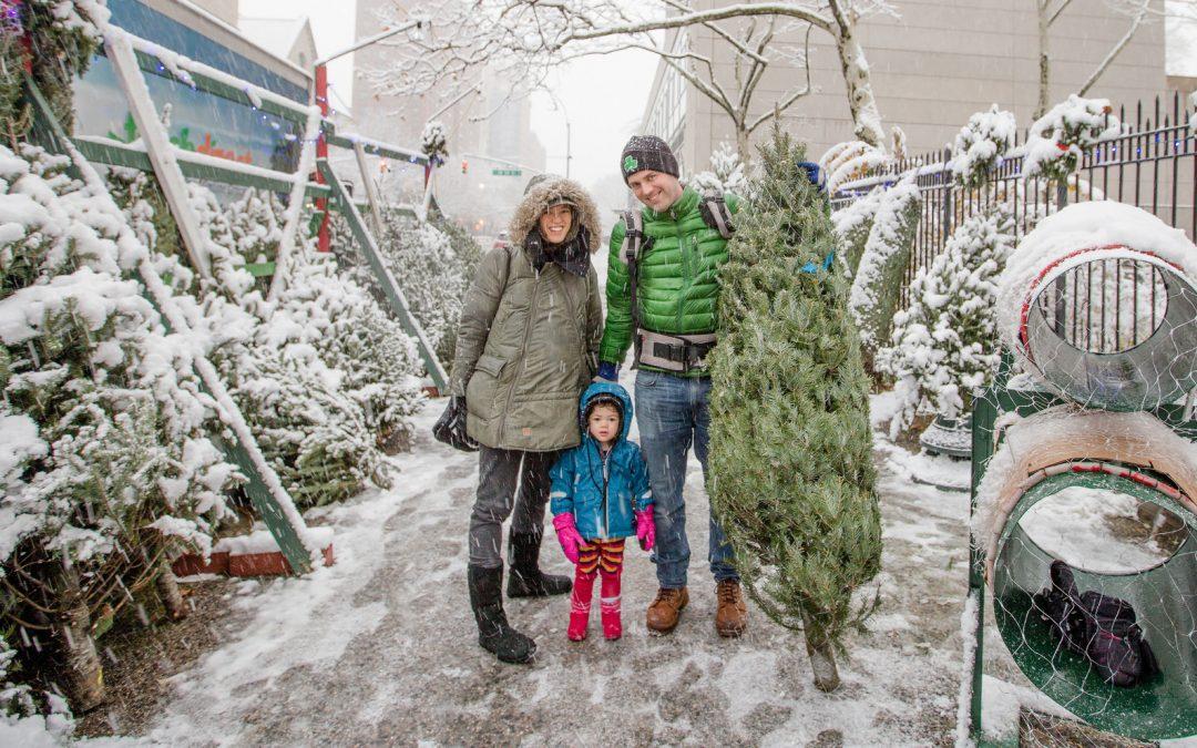 mission : christmas tree!